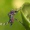 Casos de dengue caem 80% no primeiro bimestre de 2014