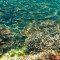 Recifes de corais são essenciais para salvar cidades costeiras