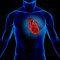 Molécula mostra potencial contra insuficiência cardíaca