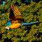 Tráfico de pássaros é mais perigoso do que parece