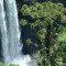 Pinheiro-brasileiro ainda pode ser salvo