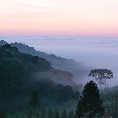 Biotropica publica edição especial sobre ecossistemas brasileiros