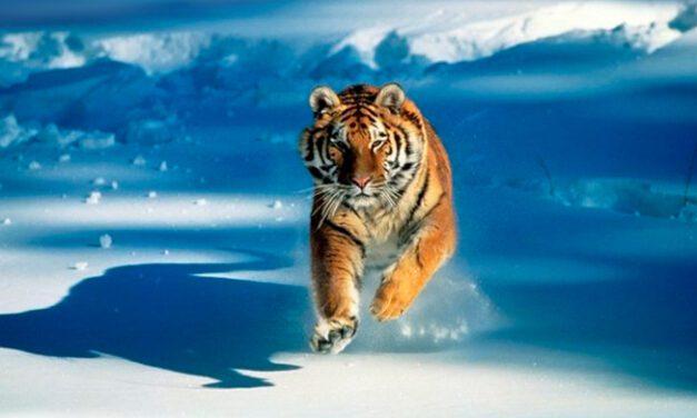 A favor dos animais: WildLeaks