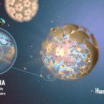 HPV, assista animação em vídeo tecnológico. Fotoframe: Nanobot / Divulgação