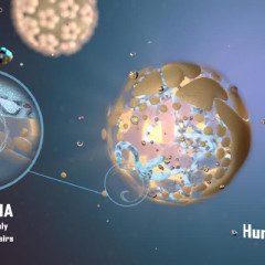 HPV: assista uma animação em vídeo tecnológico e conheça a doença