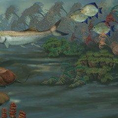 Mississippian, um habitat marinho na América do Norte