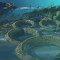 Oceano pré-histórico: recifes carbonáticos no período Cretáceo