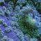 Oceano: o espetáculo da vida nos recifes de corais