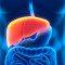 Congresso Brasileiro de Hepatologia traça um panorama das doenças do fígado