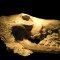 Competição por recursos causou extinção de linhagens de canídeos
