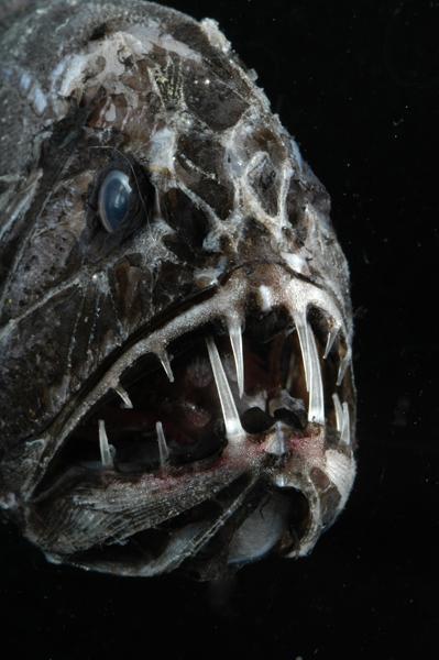 Bichos assustadores: vida marinha com aparências dignas do Dia das Bruxas