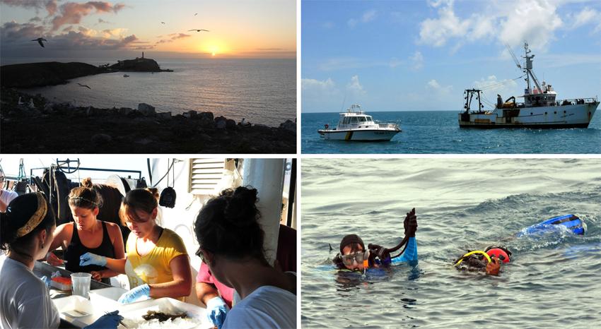 Pesquisadores em Abrolhos: resultados das pesquisas podem explicar melhor sobre como a fauna marinha predominante no arquipélago está se comportando, depois que foram descobertos indícios de resíduos do lamaçal da Samarco. Foto: ICMBio