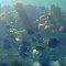 Mar Sem Fim visitou Abrolhos antes da tragédia de Mariana, assista aos vídeos