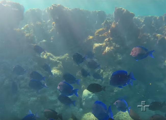 Mar Sem Fim visitou Abrolhos antes da tragédia de Mariana, assista os vídeos