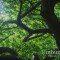 Plantas brasileiras podem ajudar a enfrentar impactos das mudanças climáticas