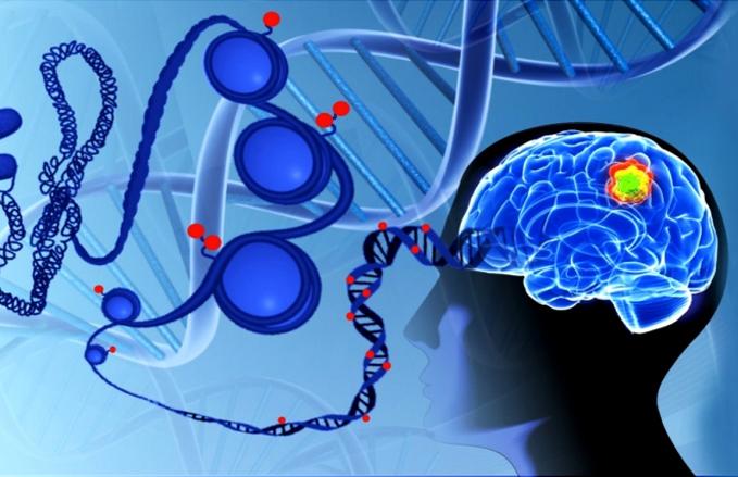 Resultados de pesquisa conduzida na USP de Ribeirão Preto e publicada na revista Cell podem melhorar avaliação do prognóstico e tratamento de gliomas. Imagem: divulgação