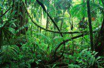 Consumo de água da AL e Caribe depende da proteção das florestas, alerta FAO