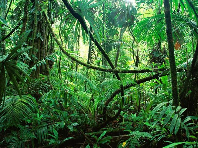 Mudanças climáticas ameaçam a Amazônia e, consequentemente, disponibilidade de recursos hídricos para países da região. Foto: Flickr (CC) / Dams999