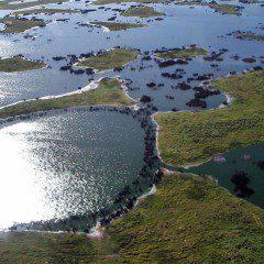 Pantanal pode ter temperaturas elevadas em 7º C até 2100, indica estudo