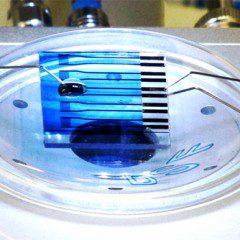 Dispositivo eletrônico detecta moléculas ligadas a câncer, Alzheimer e Parkinson
