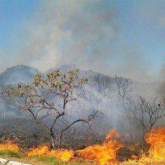 Estudo testa resistência da vegetação do Cerrado às queimadas