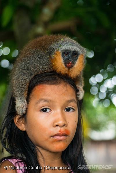 Criança Munduruku com macaco zogue zogue (gênero Callicebus). Terra Indígena Sawré Muybu, do povo Munduruku, no Pará. O governo brasileiro planeja construir 43 hidrelétricas na bacia do Tapajós. A maior delas, São Luiz do Tapajós, terá impacto sobre a vida dos povos indígenas e comunidades ribeirinhas. Barragens como essas ameaçam o frágil bioma da Amazônia, onde os rios são fundamentais para a regeneração e distribuição de espécies vegetais e a sobrevivência da flora local. Itaituba, Pará. 21/02/2016. Foto: Valdemir Cunha/Greenpeace.