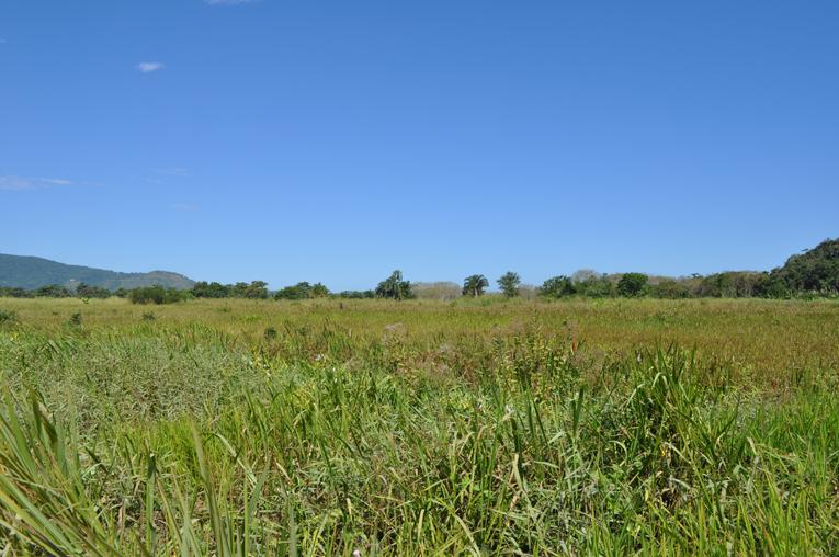 Área desmatada, onde só o mato cresceu depois de um embargo do Ministério Público de Ubatuba, segundo os moradores. Foto: aloimage