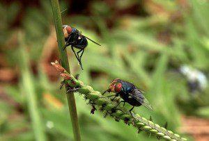 Análises de mitogenômica em larga escala indicam que esse grupo de insetos teria surgido há 22 milhões de anos, ao mesmo tempo que mamíferos pastadores. Foto: divulgação