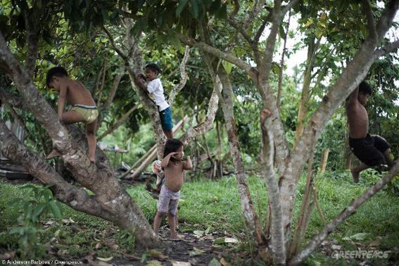 Crianças se divertem subindo e brincando nas árvores. Foto: © Anderson Barbosa