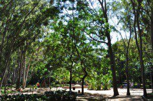 Parque do Piqueri: este já é considerado um maciço verde integrado à floresta urbana. Foto: aloimage