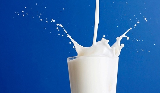 Pesquisadores da Unicamp verificaram que a proteína funciona como escudo para a microbiota intestinal contra alimentos ricos em gordura. Foto: Wikimedia Commons
