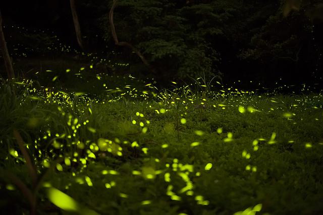 Revoada de cupins. Foto: Fred Huang / Flickr / CC BY-NC 2.0