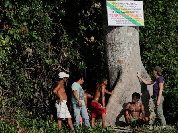 De camiseta roxa, Bunny ajuda índios Munduruku na fixação de uma placa demarcatória. Foto: © Lunaé Parracho / Greenpeace