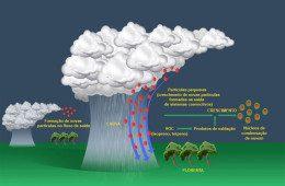 Estudo desvenda como são produzidas as partículas que alimentam as nuvens da Amazônia