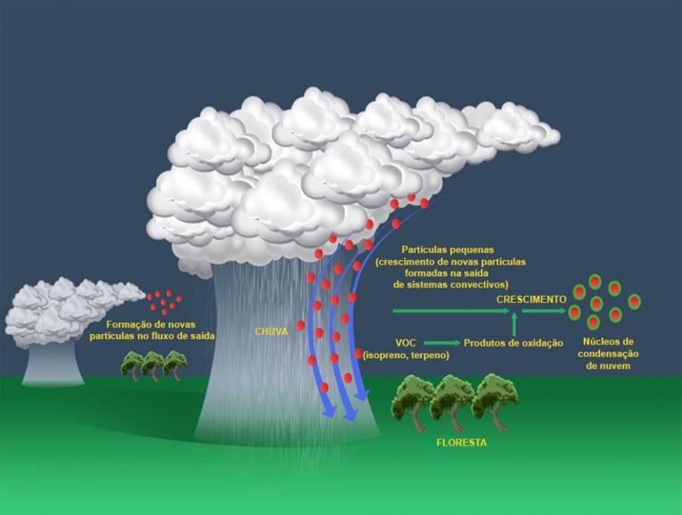Imagem: Nature, Wang et al