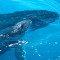 Reforço mundial a favor das baleias