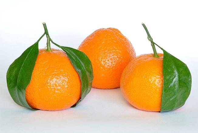 Pesquisadores do INCT Citros pretendem transferir para a fruta genes de tangerinas e outros citros relacionados à tolerância a doenças. Foto: Wikimedia Commons