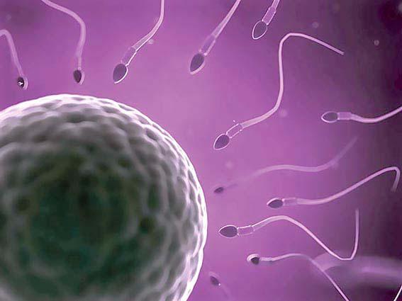 Espermatozoides e célula ovariana. Foto: divulgação / SOGESP