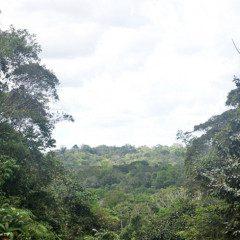 Amazônia necessita de novo modelo de desenvolvimento econômico, avaliam pesquisadores