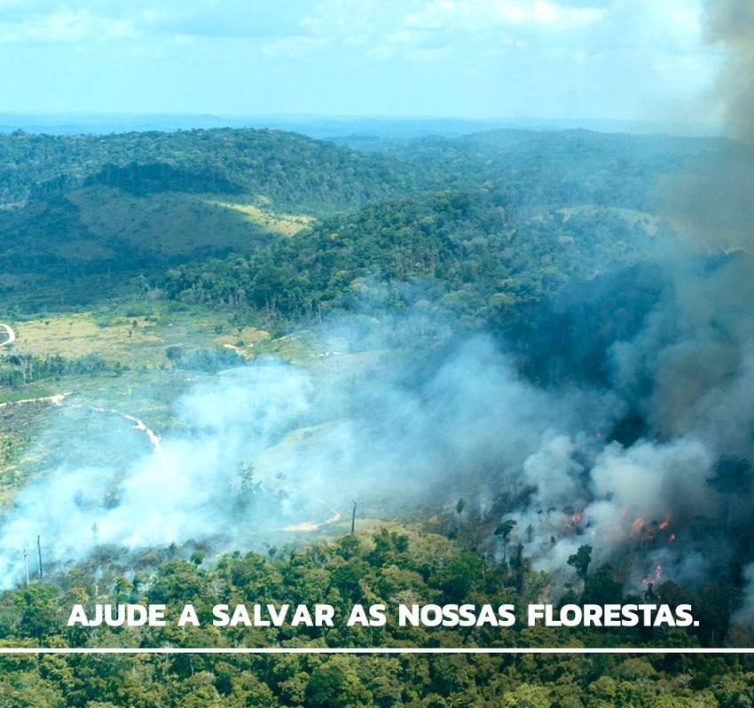Foto: Rogério Assis / Greenpeace