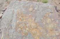 Fósseis do período Ediacarano são descobertos na Argentina, vídeos
