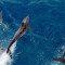 Diário de bordo: golfinhos voltam para a despedida nos Corais da Amazônia