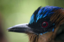 Projeto quer sequenciar todas as espécies da Terra, vídeo