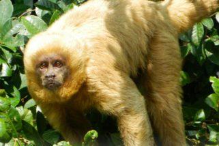 Impacto do ecoturismo à fauna silvestre deve ser mais bem investigado, diz cientista