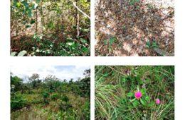 Uma vez degradado, o Cerrado não se regenera naturalmente