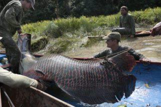 Projeto Pesca Sustentável, vídeos