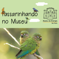 Birdwatching: Passarinhando em São Paulo