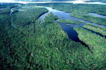 """Estudo aponta quem é o """"dono"""" do carbono no Brasil"""