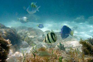 Rede Nacional de Pesquisa em Biotecnologia Marinha é criada