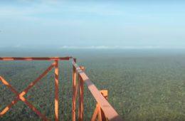 Pesquisadores usam torre na Amazônia para investigar relação da floresta com o clima global, vídeo
